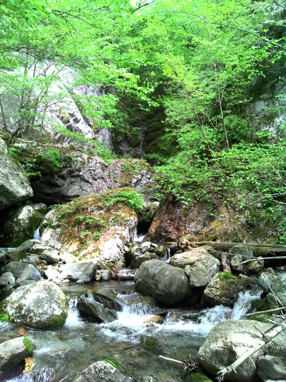 小瀬戸谷の渓流