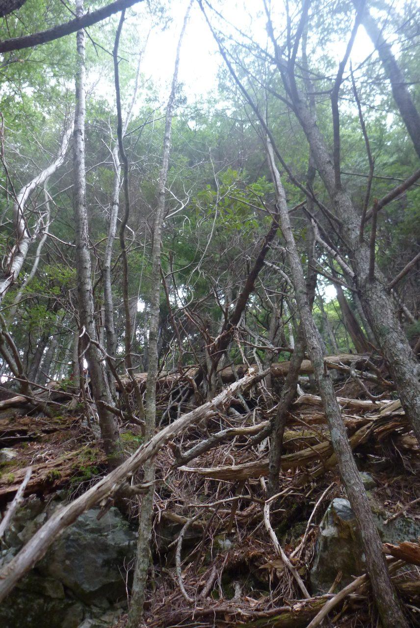 岳沢越し - 正ルート手前の尾根を登る - その1