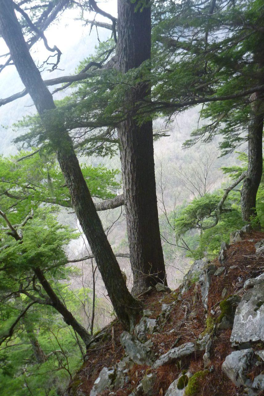 岳沢越し - 正ルート手前の尾根を登る - その3