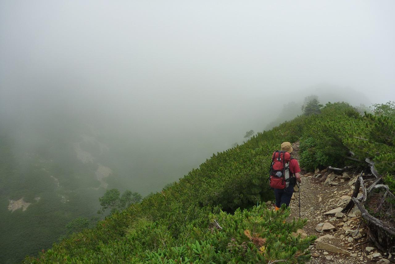 仙丈ヶ岳 - ハイマツの稜線