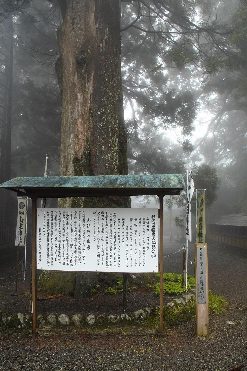 山住神社 - 境内の大スギ