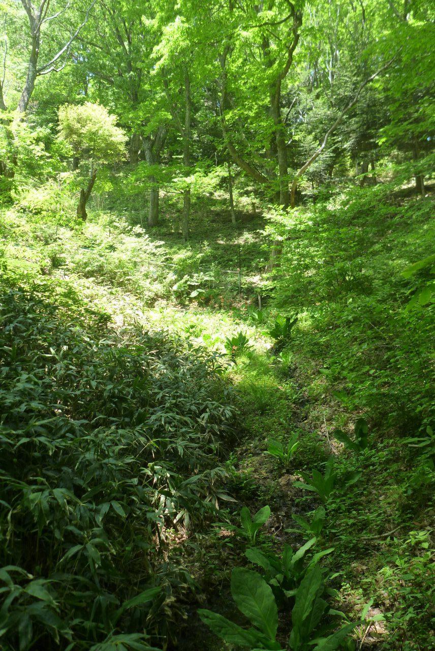 萱野高原 - 植物園1