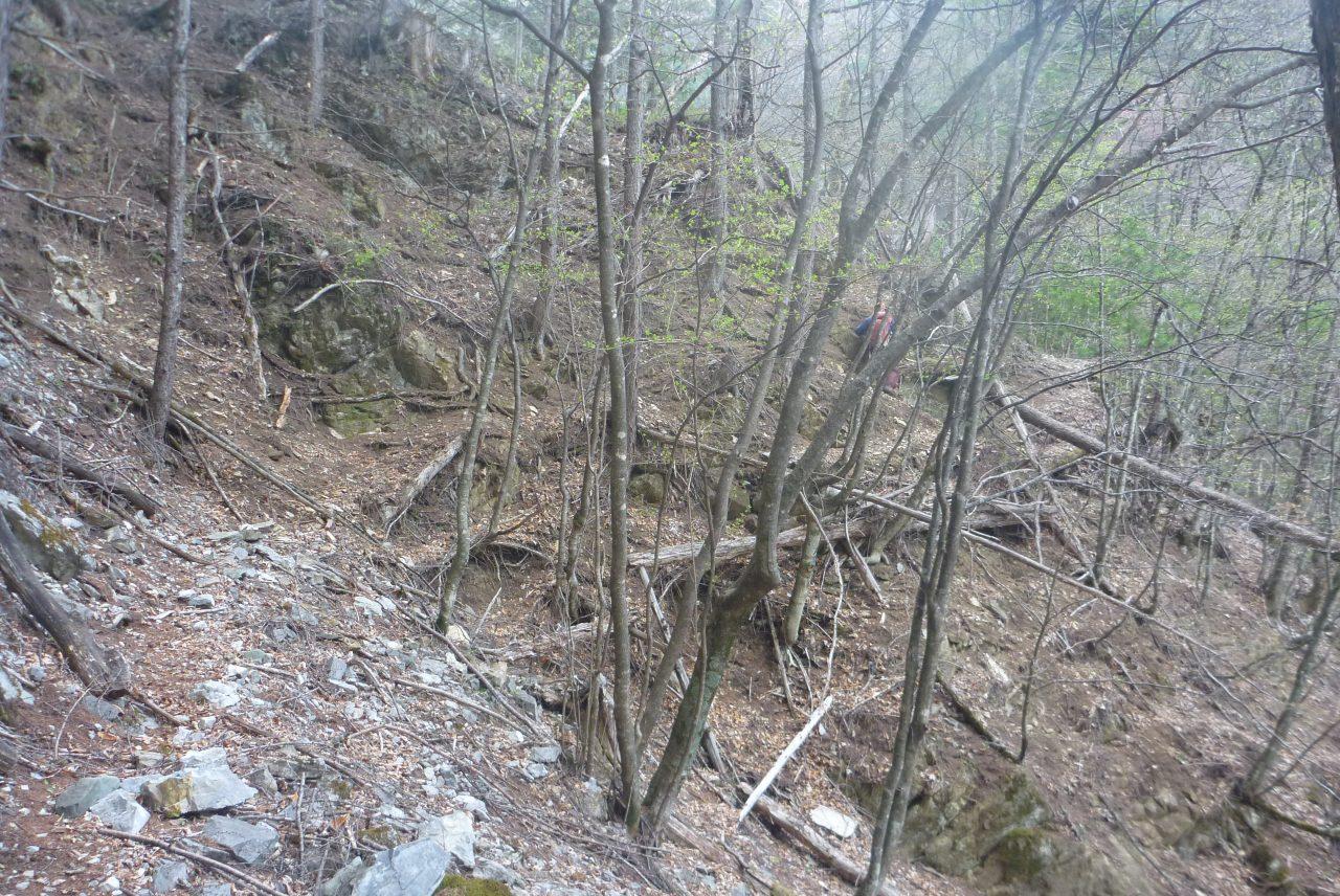 岳沢越し - 古い林道跡