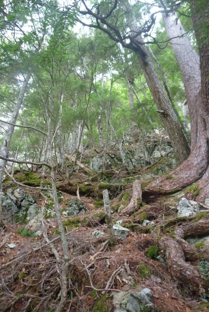 岳沢越し - 正ルート手前の尾根を登る - その2