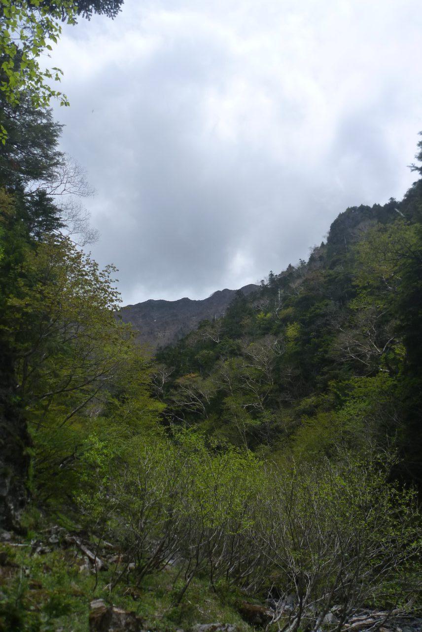 三軒岩小屋沢 - 仙丈ヶ岳稜線を望む